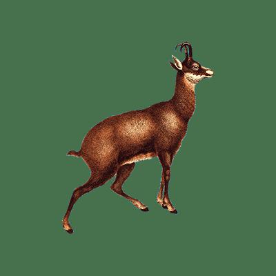 kirschholzbrettchen Dackel